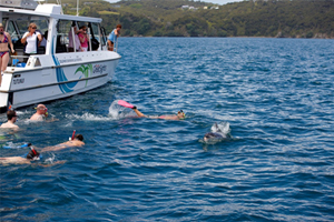 Fuller's GreatSights Dolphin Eco Experience
